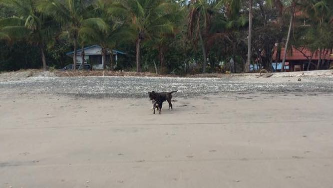 doggy on         beach