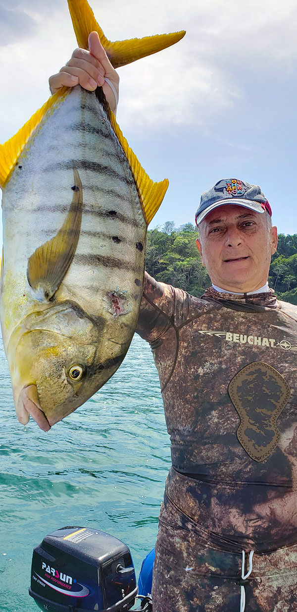a very difficult to catch Golden Striped Snapper I spearfished a week ago