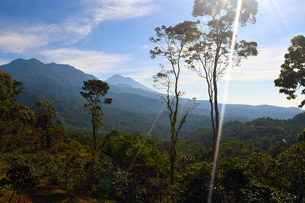 The dueling Fincas of Hamburgo and Argovia both multi-generational master coffee growers and agricultural powerhouses