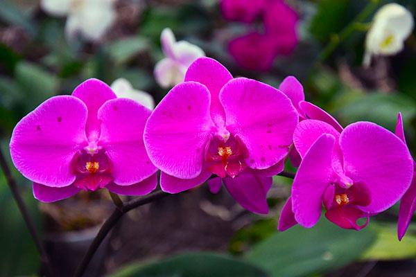 flowers at argovia
