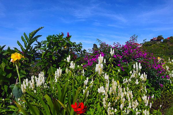 flowers at hamburgo