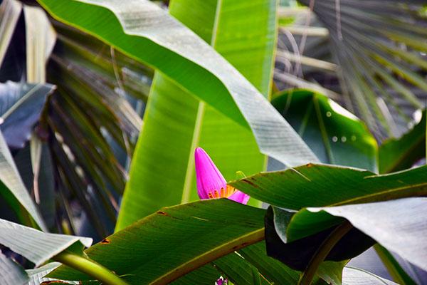 budding orchids