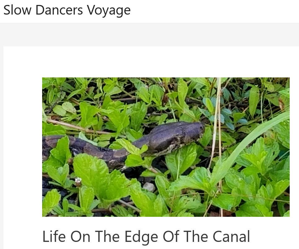 www.slowdancersvoyage.com