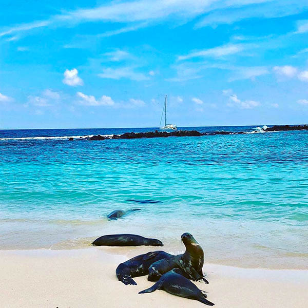🇪🇨 DESTINATION GALAPAGOS, ECUADOR MUST SEE