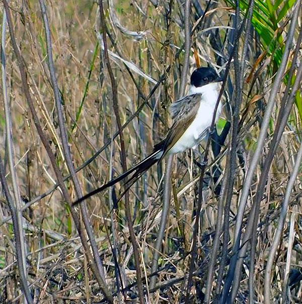 1000 plus bird species in Panama