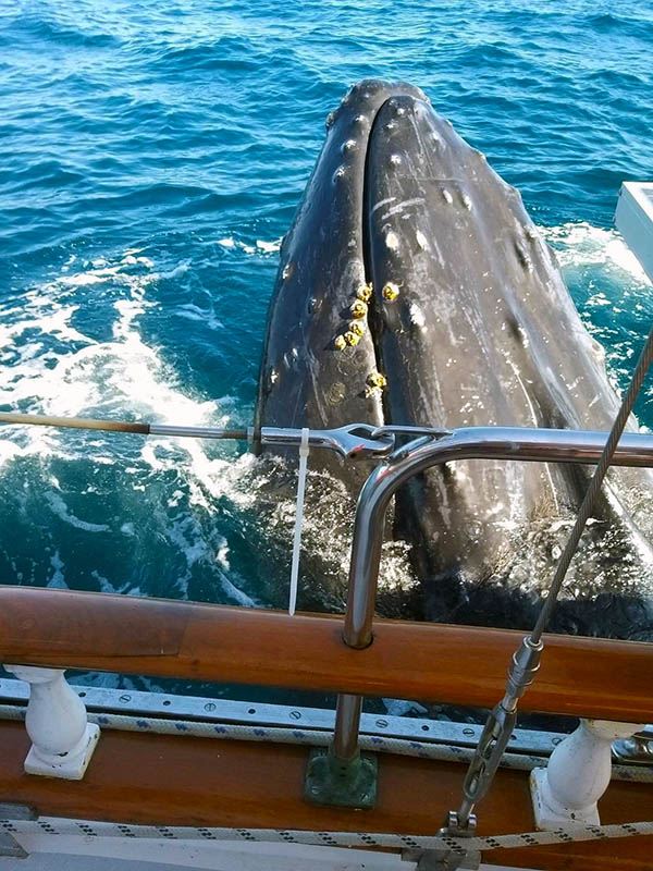 PICTURE OF THE WEEK  and entry into the UNINVITED VISITORS Contest WHALES