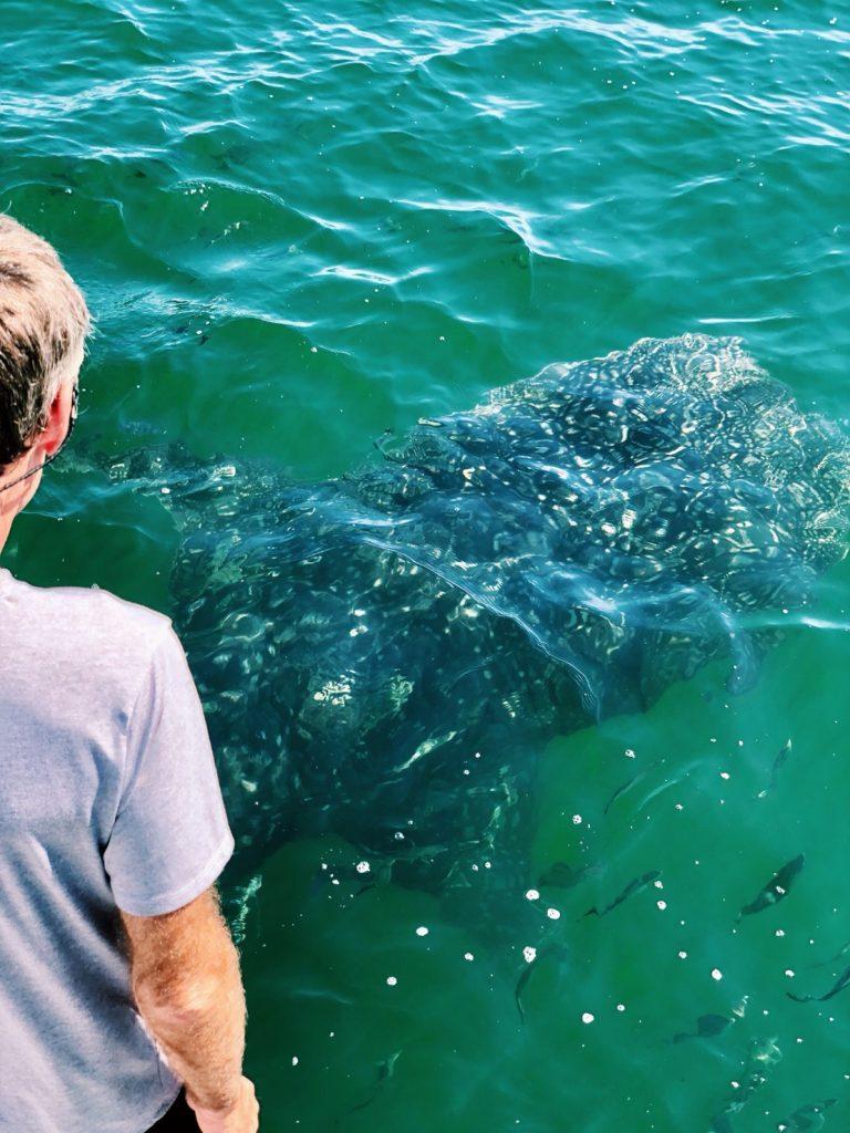 Followed by a special visitor a baby dududududududuu whale-shark