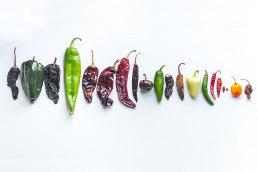 Panama Posse Peppers