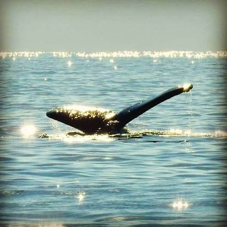 we sail where the whales splash