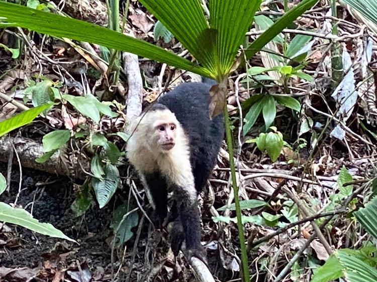 ROGRESS ALONG THE COAST OF COSTA RICA