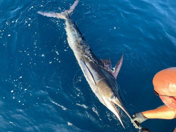 BIG FISH ON